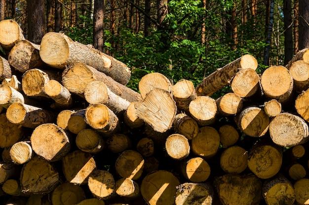 Extração de madeira na floresta