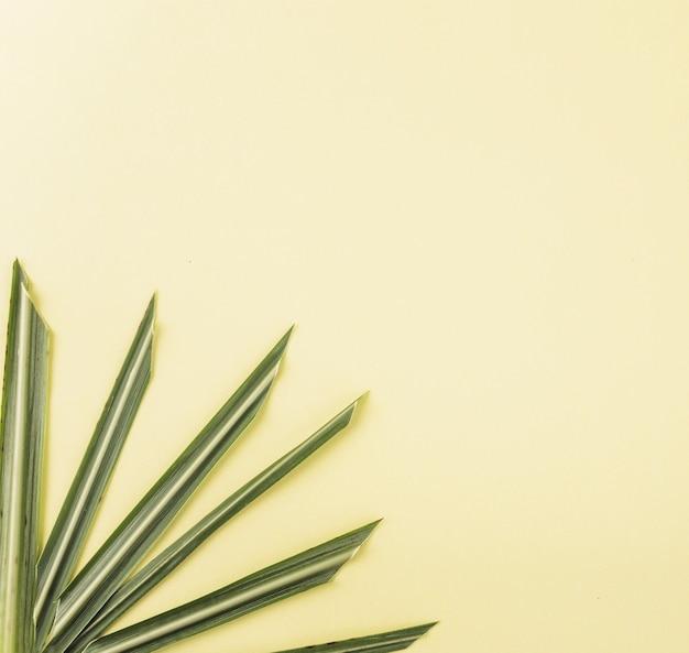 Extremidades agudas da folha da planta
