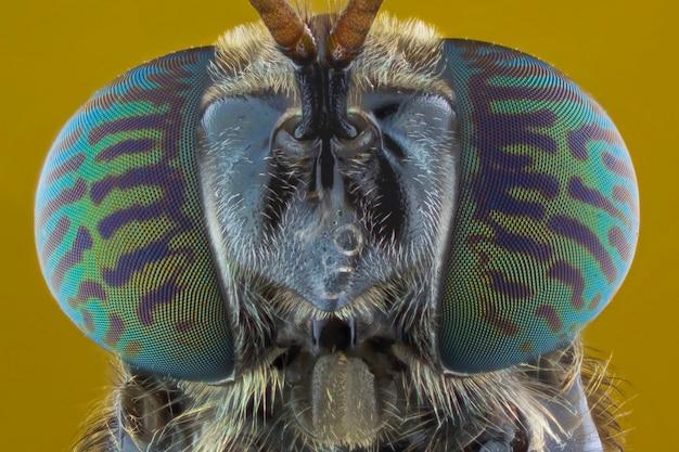 Extremo close-up de mosca soldado