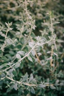 Extremo, close-up, de, verde, ramo, de, planta