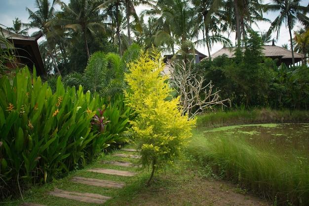 Exuberante jardim tropical