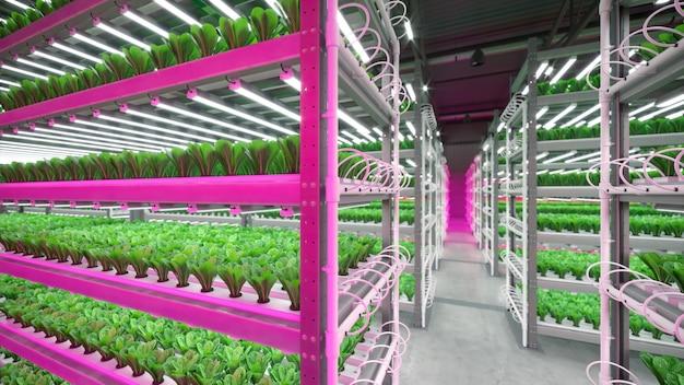 Fábrica de planta vegetal interior hidropônica em armazém de espaço de exposição. interior da fazenda hidropônica. salada verde. alface romana crescendo em estufa com raio led.