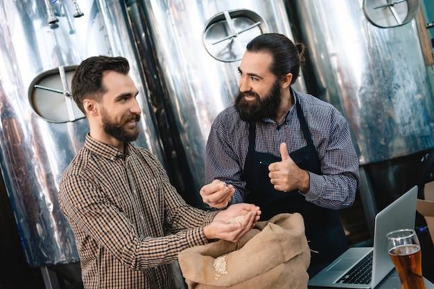 Fabricantes de cerveja que examinam grãos de alta qualidade da preensão da cevada.
