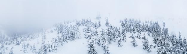 Fabuloso panorama coberto de neve de abetos