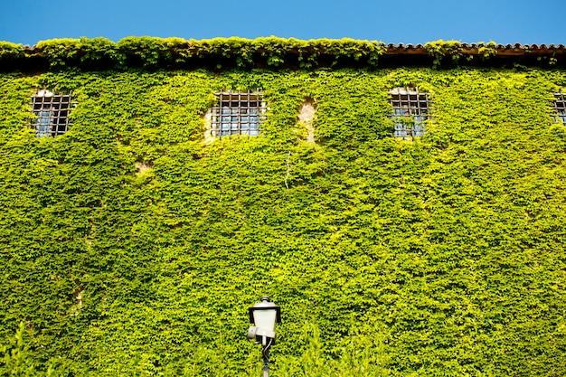 Fachada, de, st., giusto, castelo, coberto, com, hera verde, trieste