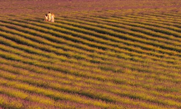 Família caminhando entre os campos de lavanda. conceito de família