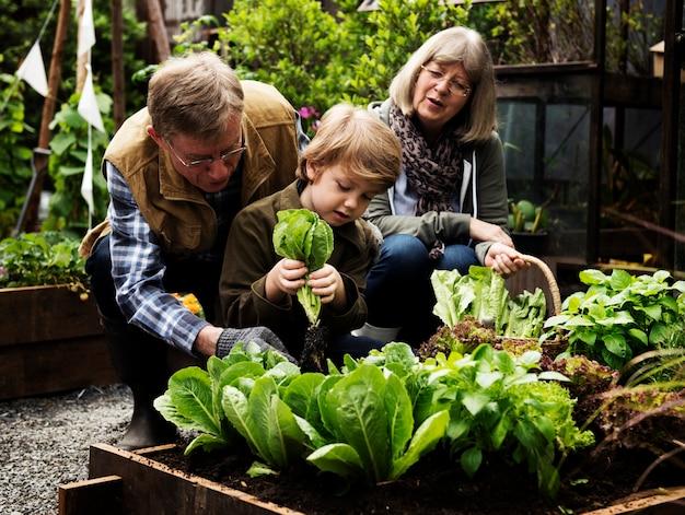 Família, colheita, vegetal, de, quintal, jardim