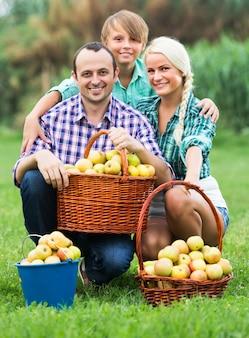 Família colhendo maçãs no jardim