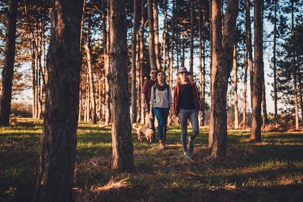 Família com cachorro caminhadas em uma floresta de pinheiros