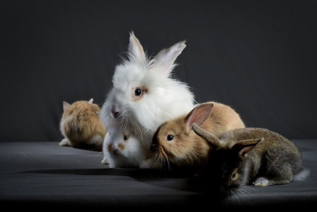 Família de coelhos fofa