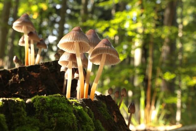 Família de cogumelos em um musgo verde