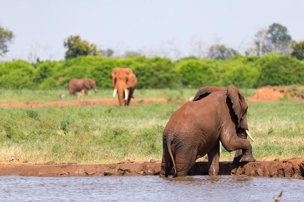 Família de elefantes bebendo água do poço
