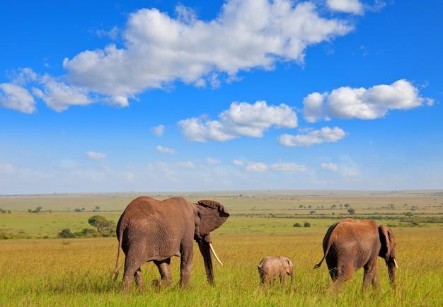 Família de elefantes em safári africano
