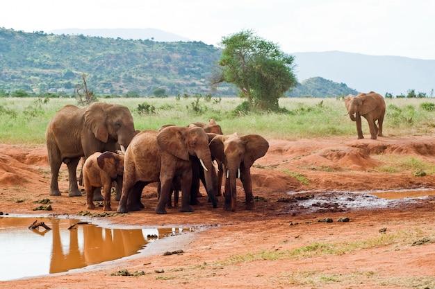 Família de elefantes perto de um lugar de rega.