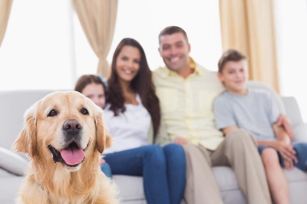 Família de olhar para golden retriever