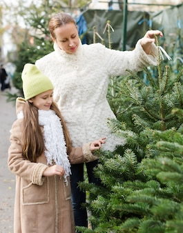 Família escolhendo árvore de natal no mercado