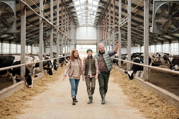 Família feliz de pai, mãe e filho adolescente em trajes de trabalho caminhando ao longo do corredor entre grandes piquetes com gado na frente da câmera