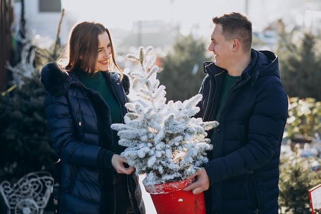 Família jovem, escolhendo a árvore de natal em uma estufa