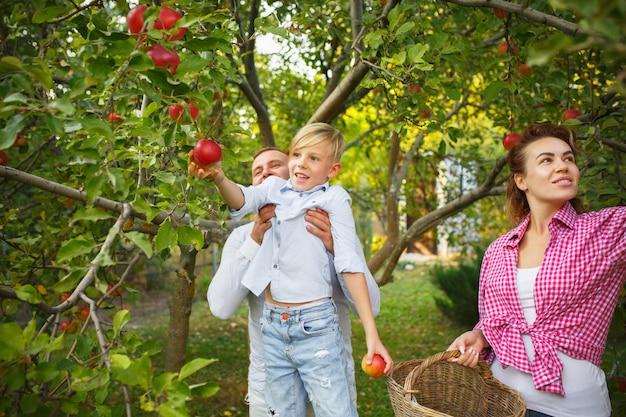 Família jovem feliz durante a colheita de frutas em um jardim ao ar livre. amor, família, estilo de vida, colheita, conceito de outono. alegre, saudável e adorável.