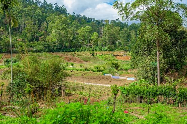 Família local no sri lanka. uma horta verdejante com canteiros planos.