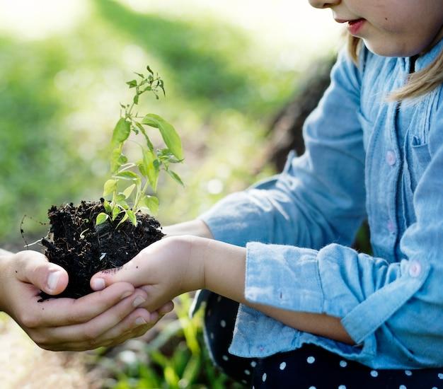 Família plantando uma nova árvore para o futuro