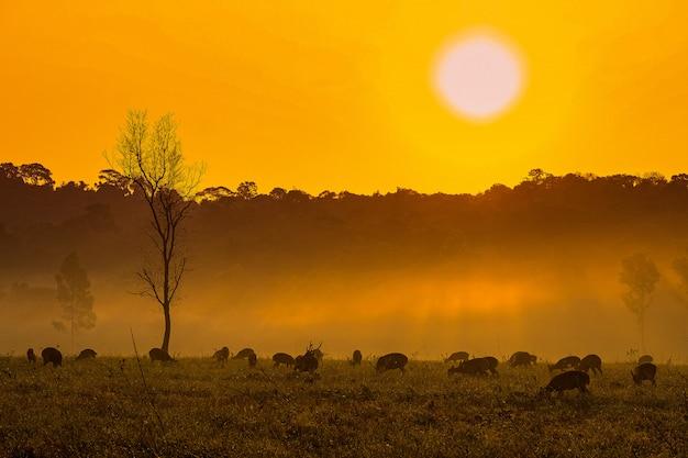 Família, pôr do sol, veado, em, thung, kramang, chaiyaphum, província, tailandia