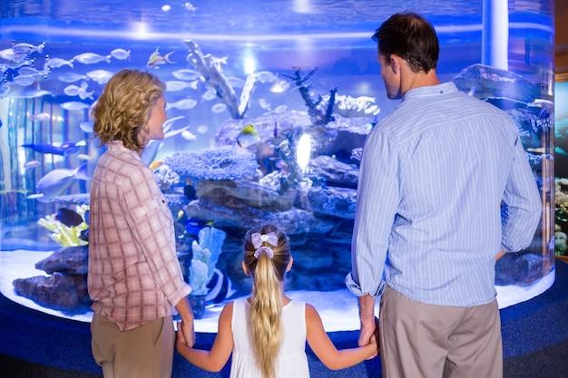 Familly olhando o tanque de peixes