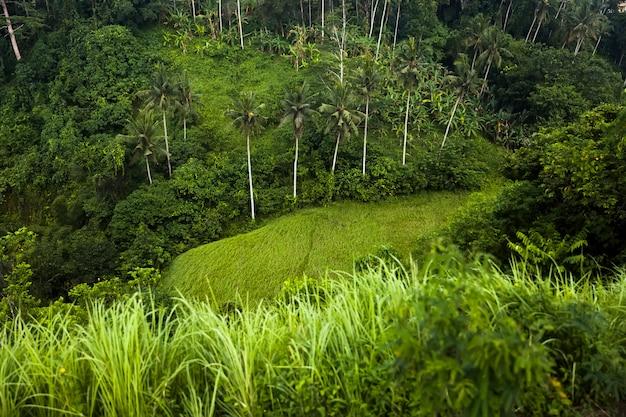 Famoso cume campuhan a pé com vista tropical e palmeiras em ubud, bali, indonésia