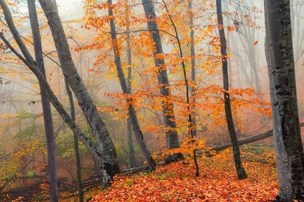 Fantasia com árvores nebulosas da floresta nas montanhas de outono
