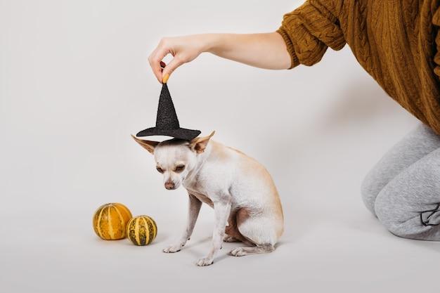 Fantasia de halloween para cãozinho fofo de halloween com chapéu de bruxa e abóboras em branco