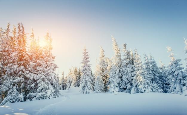 Fantástica paisagem de inverno e trilhas pisadas que levam ao