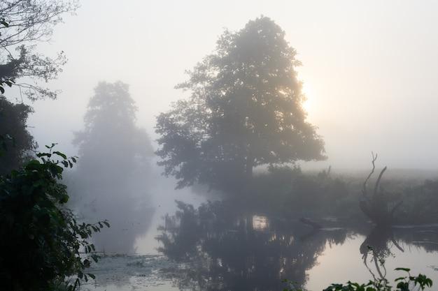 Fantástico rio nebuloso com grama verde fresca à luz do sol. o sol irradia a árvore. cenário colorido dramático. rio calmo no verão ao nascer do sol