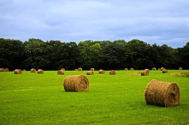 Fardo agricultura outono fundo agrícola