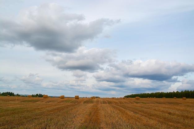 Fardos amarelos no campo e nas nuvens.