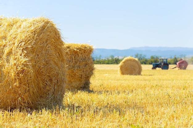 Fardos de feno dourados na zona rural