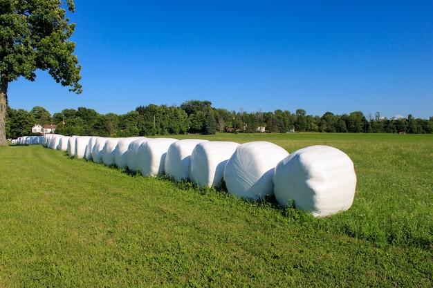 Fardos de feno embrulhados e alinhados no dia ensolarado da fazenda