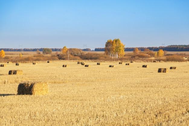 Fardos de feno espalhados pelo campo após a colheita