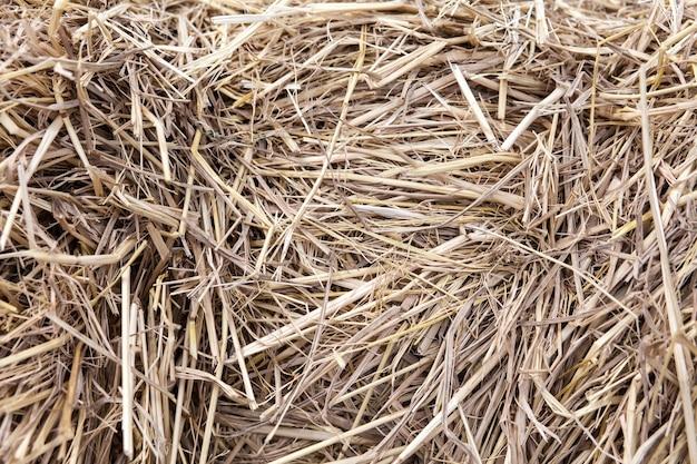 Fardos de palha colhidos de trigo