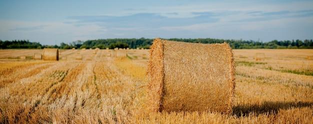 Fardos de palha de ouro amarelo de feno no campo de restolho, campo agrícola sob um céu azul com nuvens.