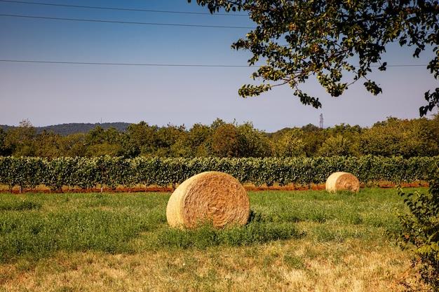 Fardos de palha em terras agrícolas, vinhas