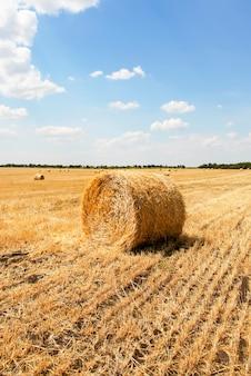 Fardos de palha em um campo com céu azul