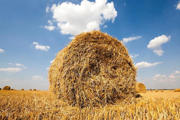Fardos de palha empilhados durante a colheita de cereais