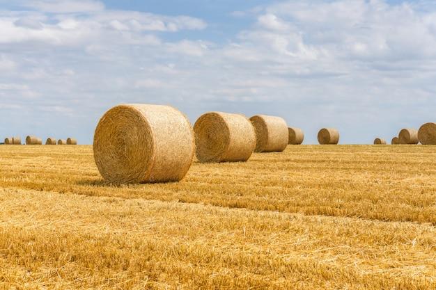Fardos de palha empilhados em um campo em reims, frança