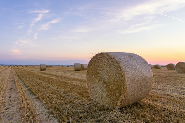 Fardos de palha empilhados em um campo no horário de verão, reims, frança