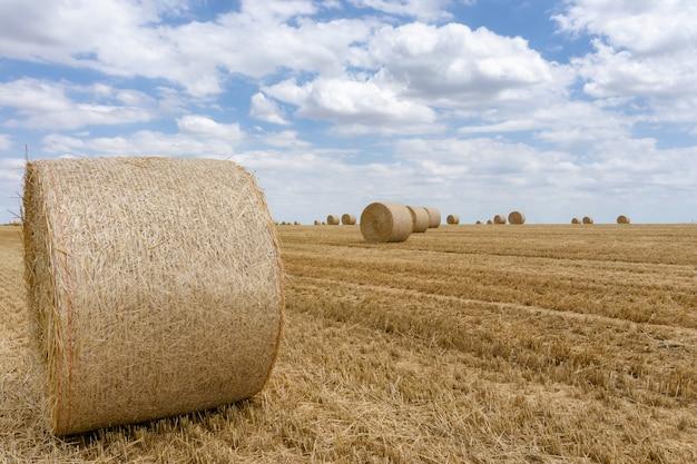 Fardos de palha empilhados em um campo no horário de verão