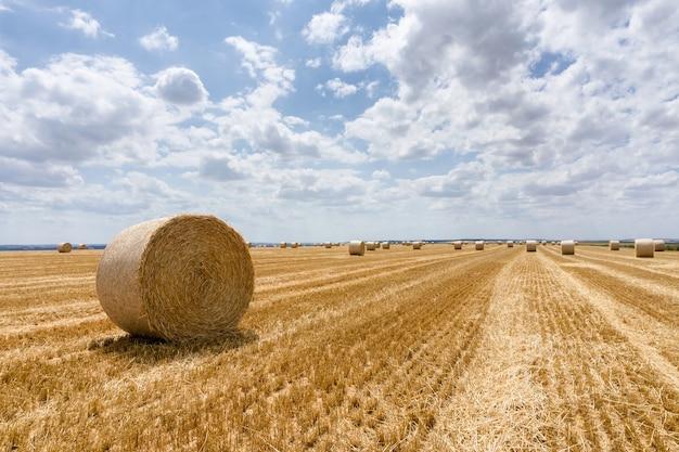 Fardos de palha empilhados em um campo no verão