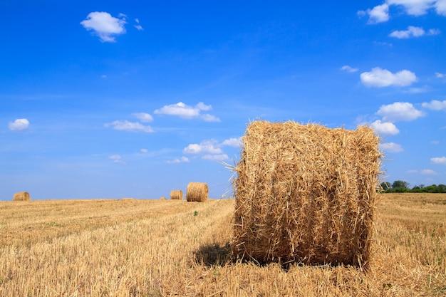 Fardos de palha esperando a coleta em um campo no outono, sob um céu azul nublado.