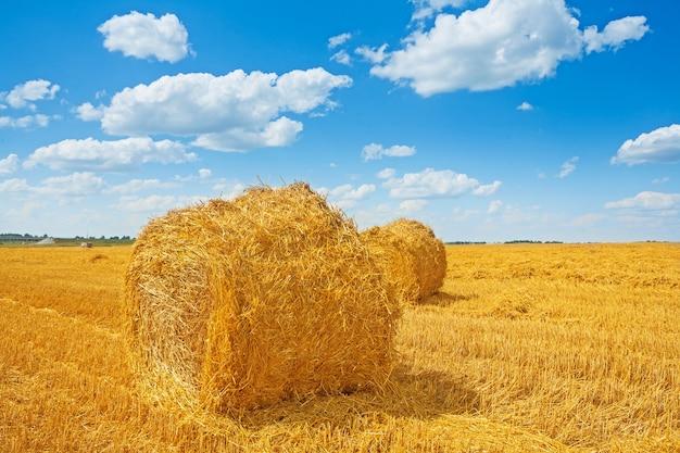 Fardos de palha no campo colhido e lindo céu nublado