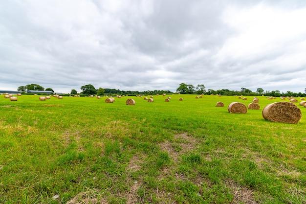 Fardos de palha recém-enrolados no campo verde com céu baixo dramático.