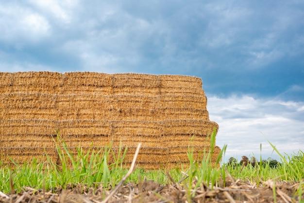 Fardos quadrados no campo, feno para o inverno, fardos de verão, agricultura